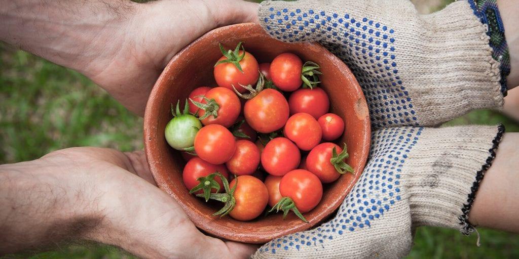 Agricultura sin intermediarios para un catering respetuoso con el entorno